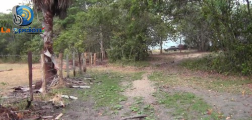 La fundación Orinoquia Biodiversa no es propietaria del predio donde denuncian la tala de árboles e intervención de los Morichales