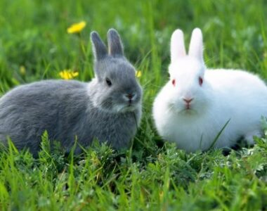 Mortal epidemia está afectando a conejos de los EEUU