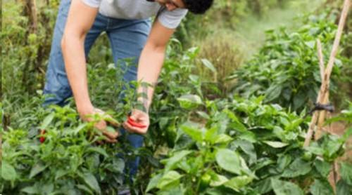 Carreño logró que incentivos a jóvenes emprendedores agropecuarios se distribuyan equitativamente en todo el país
