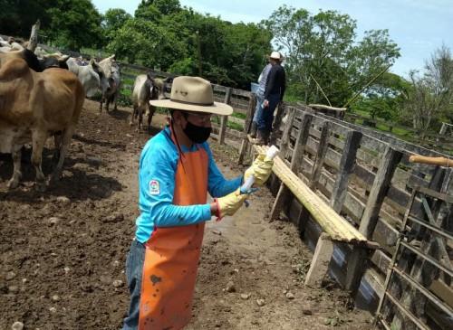 Hasta el 24 de julio se amplió el plazo para vacunación bovina en Arauca