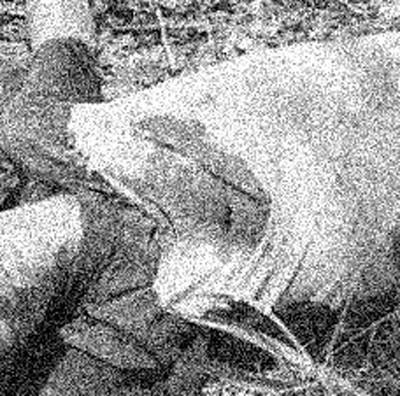 Hombre asesinado en zona rural del municipio de Tame