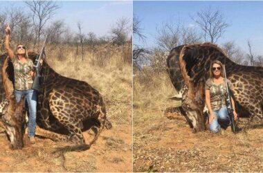 Mujer mató a jirafa y posó orgullosa en redes con el corazón del animal